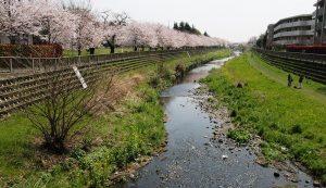 調節池や河床掘削で水害防止ー野川